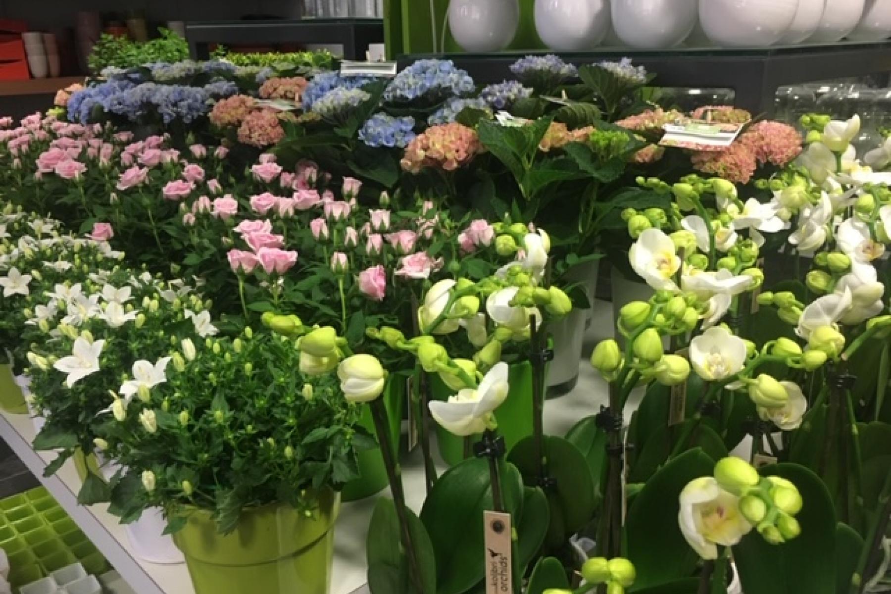VisitNieuwpoort Florist Verdonck Nieuwpoort